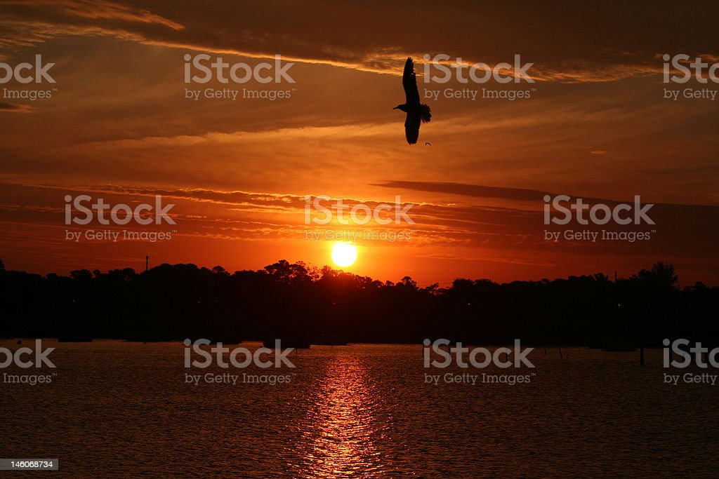 Seagull dawn royalty-free stock photo