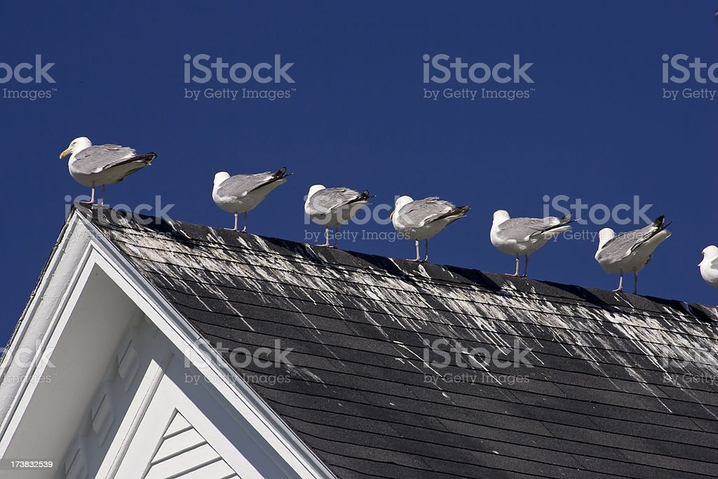 Seagull Droppings stock photo