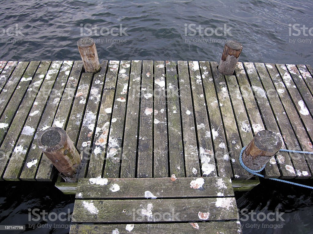 Seagull Drops royalty-free stock photo