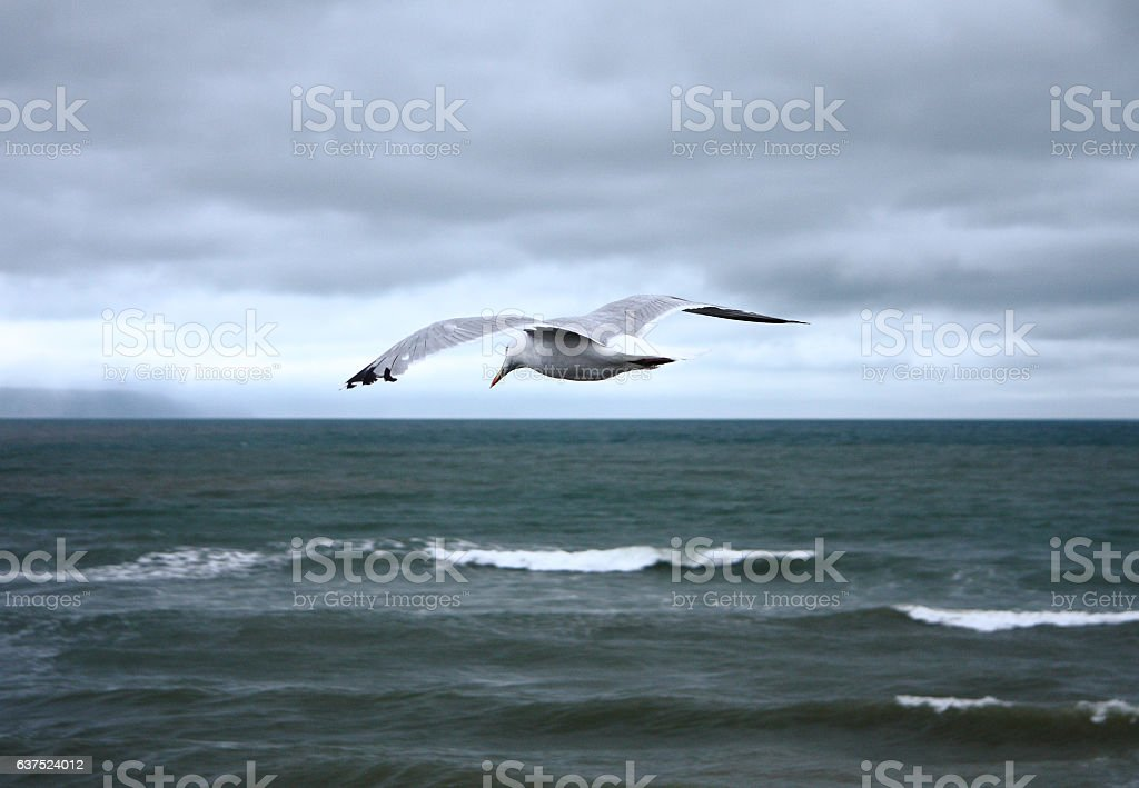 Seagull flies in a cloudy sky above the rough sea stock photo