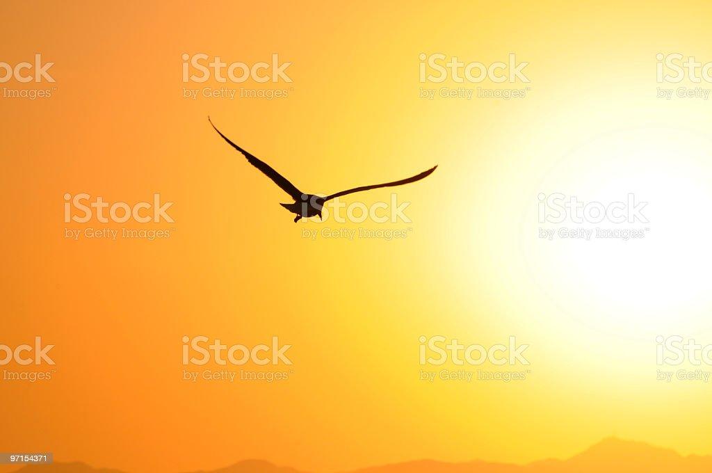 Seagull Flight at Sunset Venice Beach California stock photo