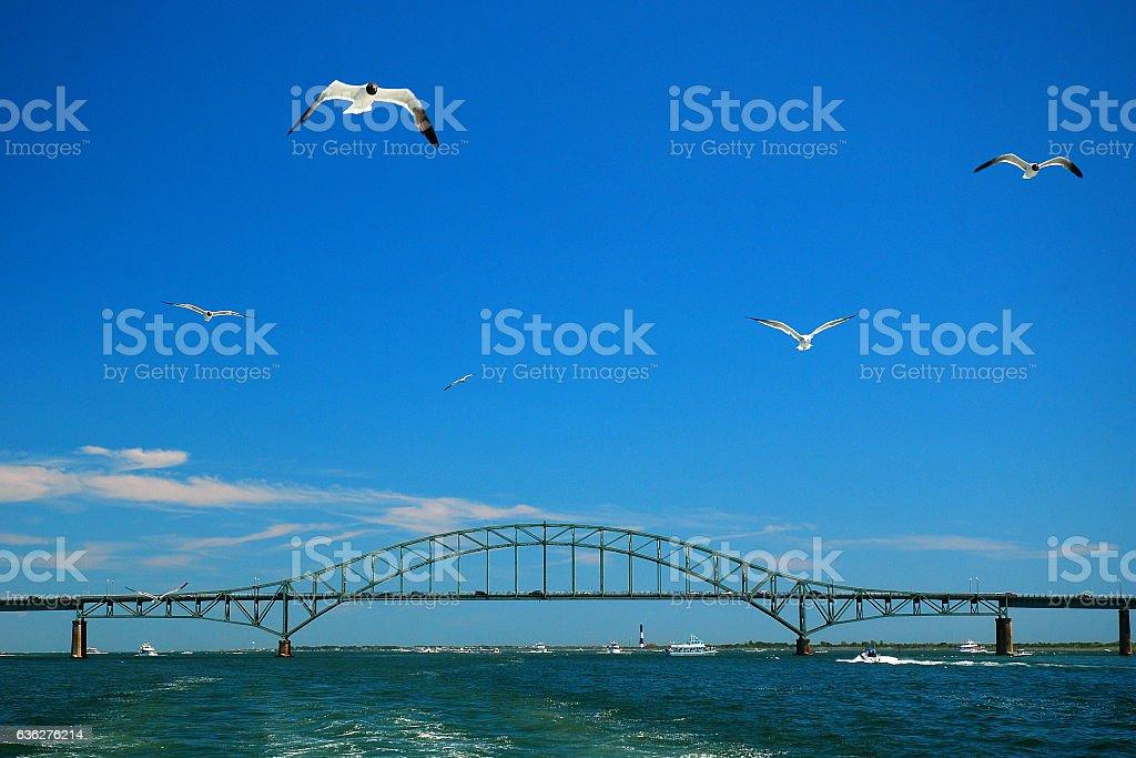 Seagull flight stock photo