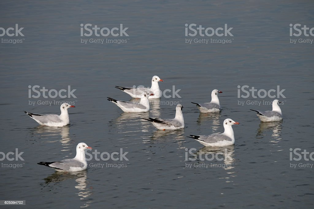 Seagull floating in the sea stock photo