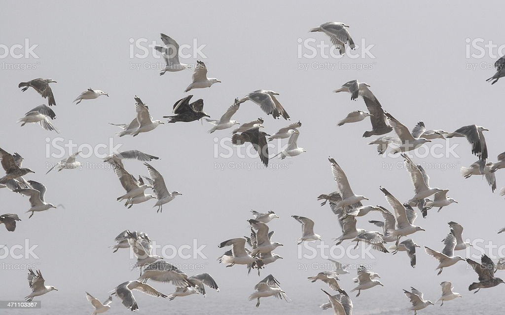 Flock of seagulls in dense fog whose wings are in various stages of...