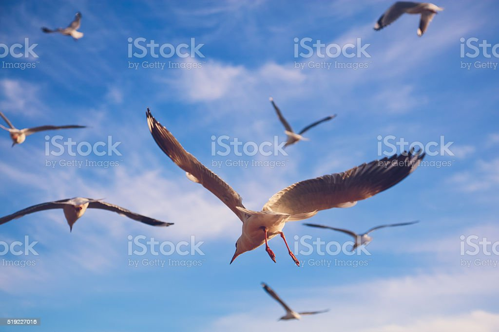 Seagull Fly Away stock photo