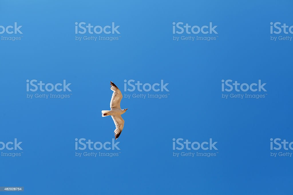 Seagull flying against clear blue sky stock photo