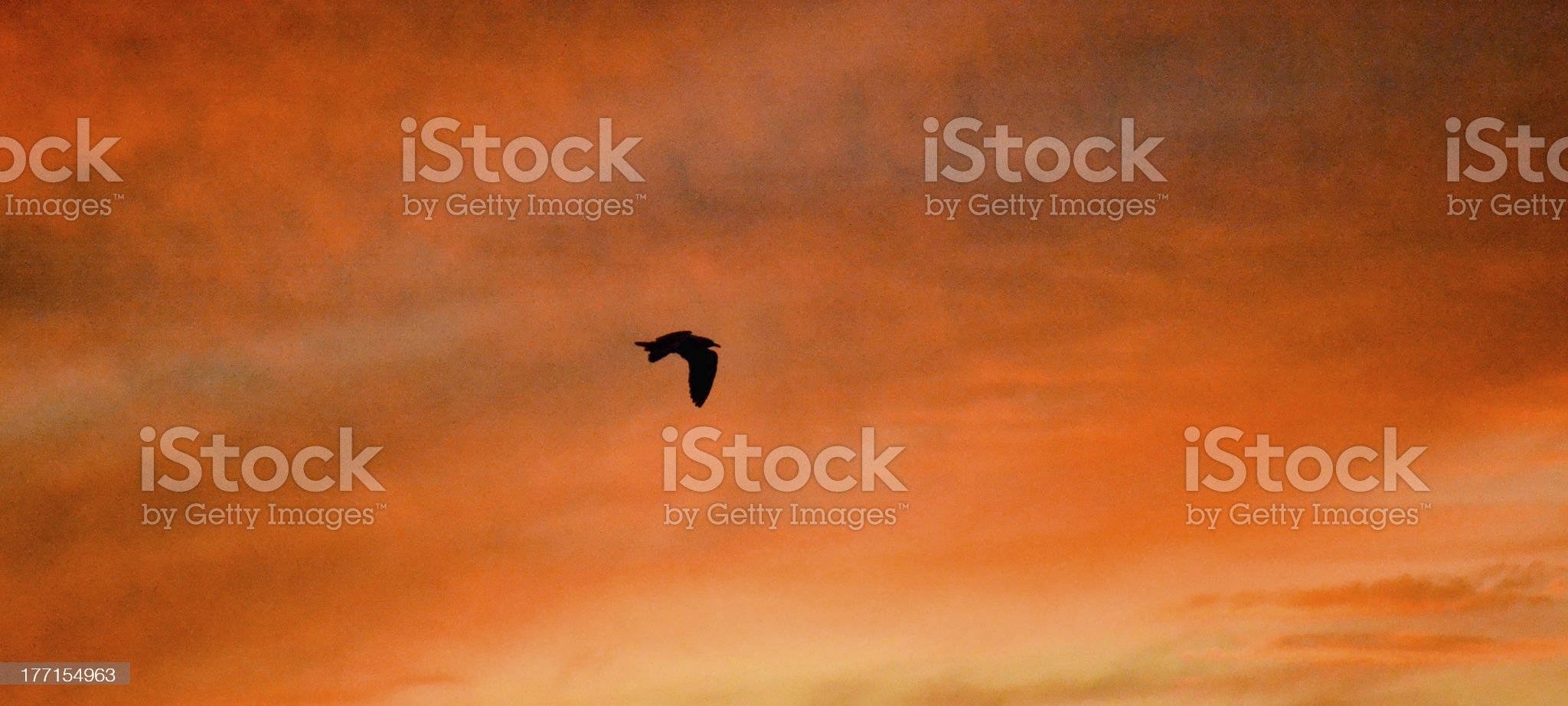 Seagull flying at sunset royalty-free stock photo