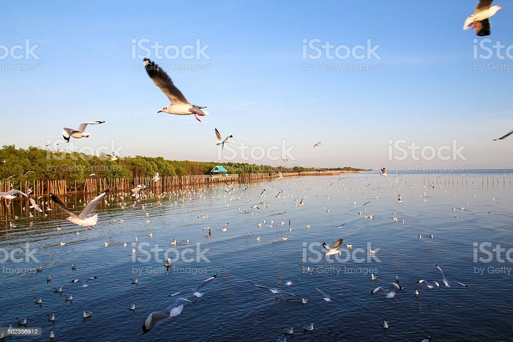 Seagull flying in the sky with sunset stock photo