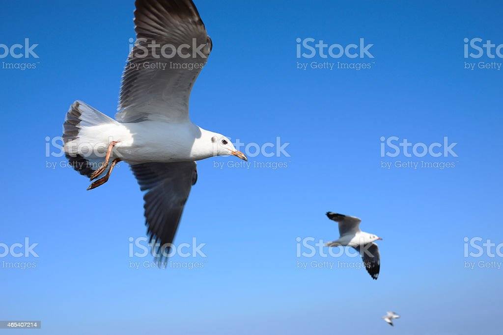 Seagull flying on blue sky royalty-free stock photo
