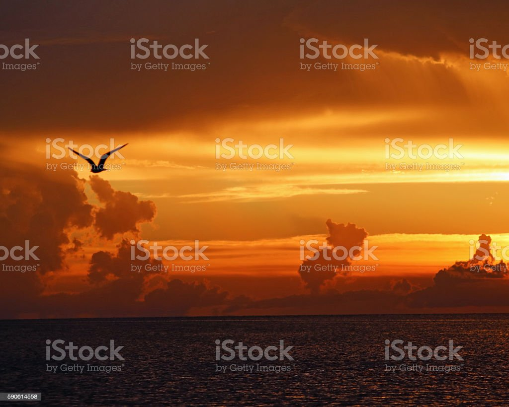 Seagull flying on Sunset background photo libre de droits