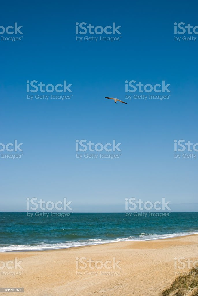 Seagull Flying Over Beach royalty-free stock photo