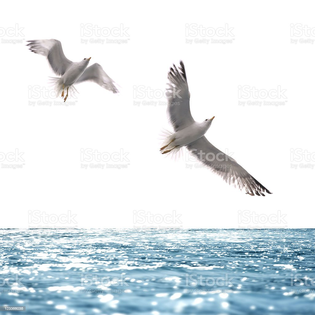 seagull flying over sea stock photo