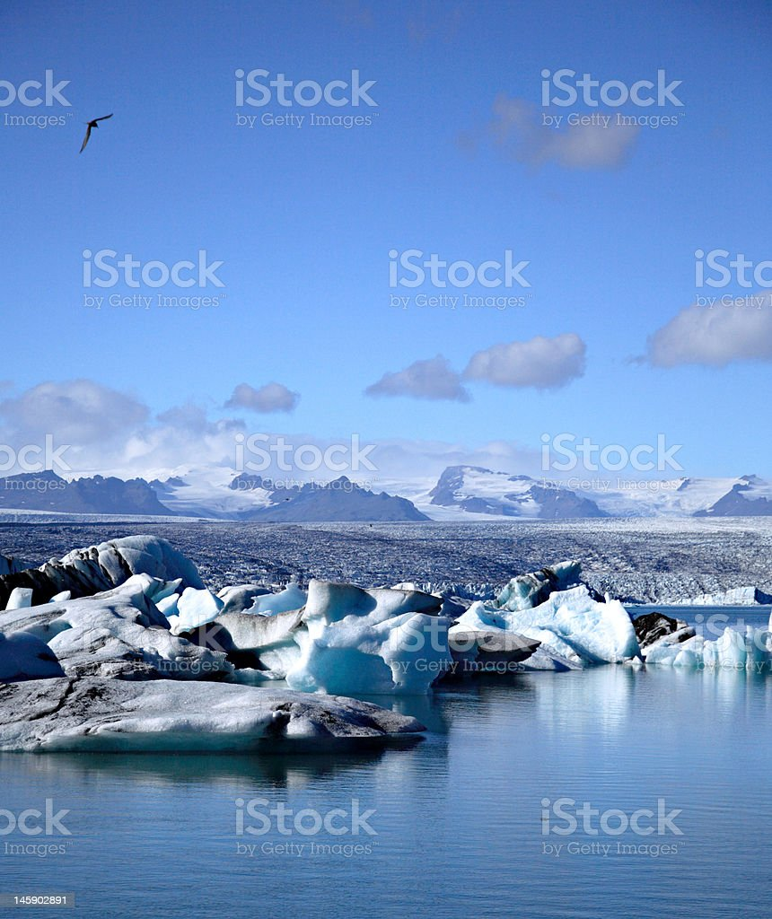 Seagull flying over the icebergs stock photo