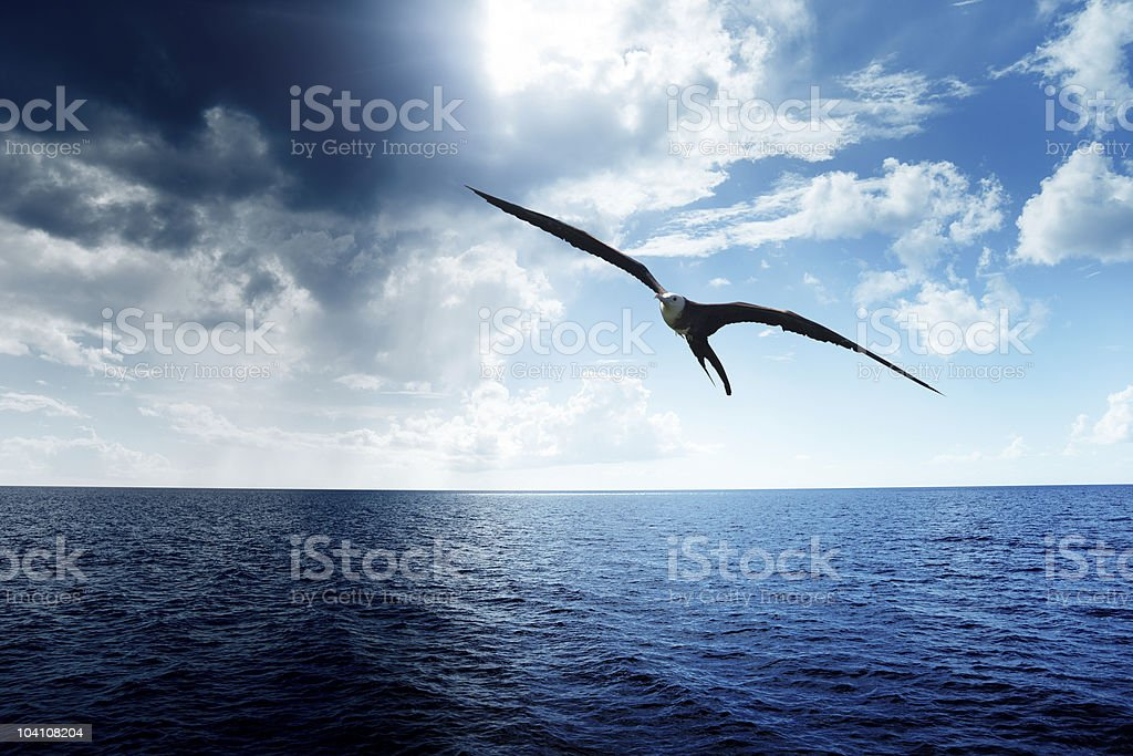 Seagull flying over the ocean in a perfect sky stock photo