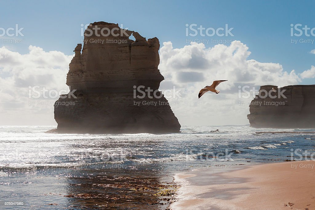Seagull flying over Twelve Apostles, Great Ocean Road, Victoria, Australia stock photo