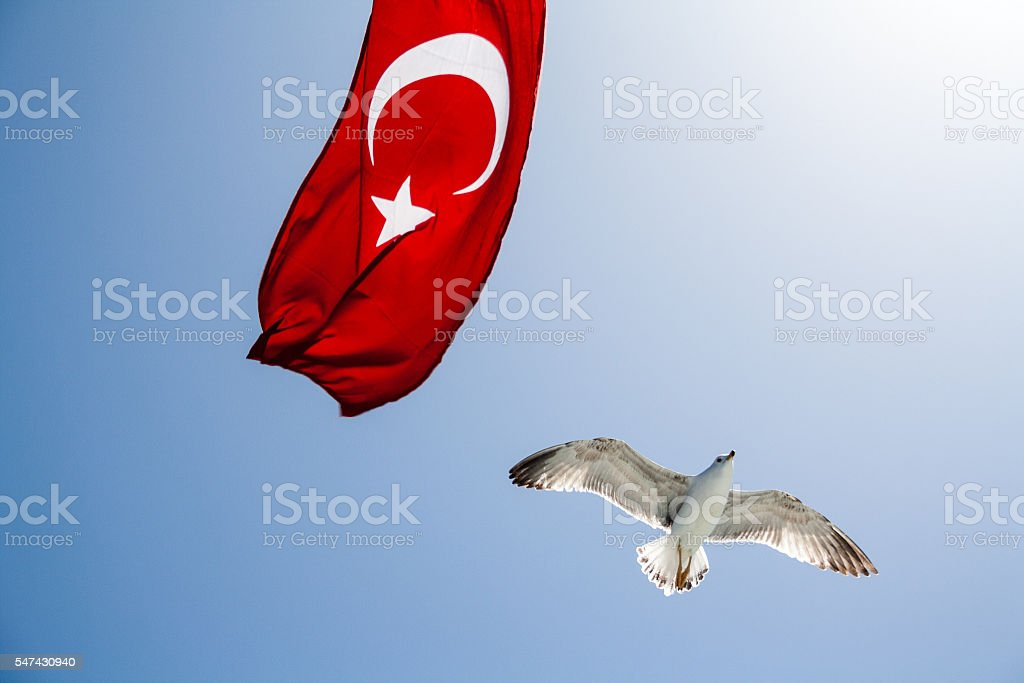 Seagull Flying Past Turkish Flag stock photo