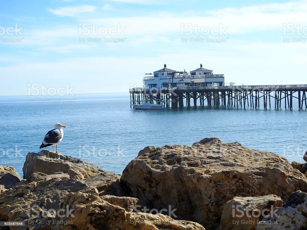 Seagull Fronting Malibu Pier stock photo