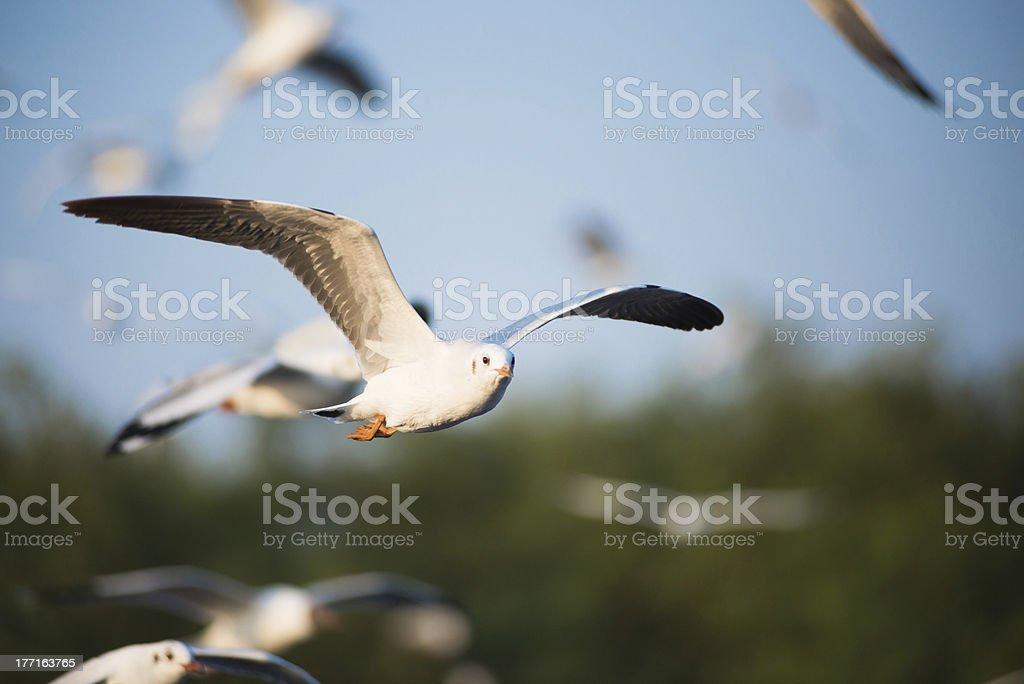 Seagull in BangPu, Thailand royalty-free stock photo