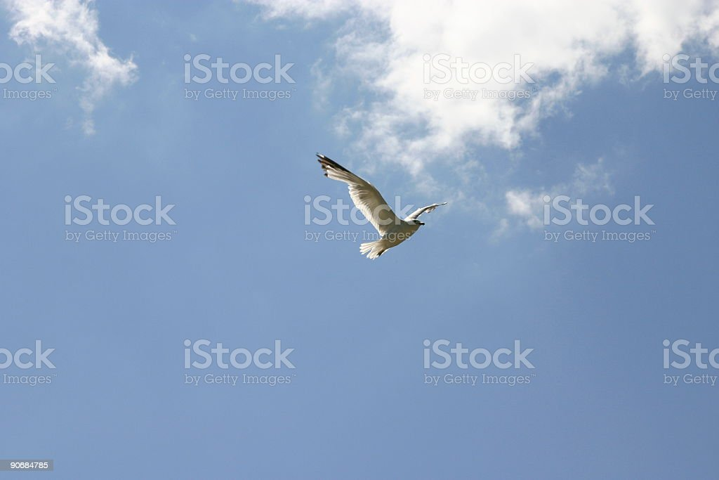 Seagull in blue sky royalty-free stock photo