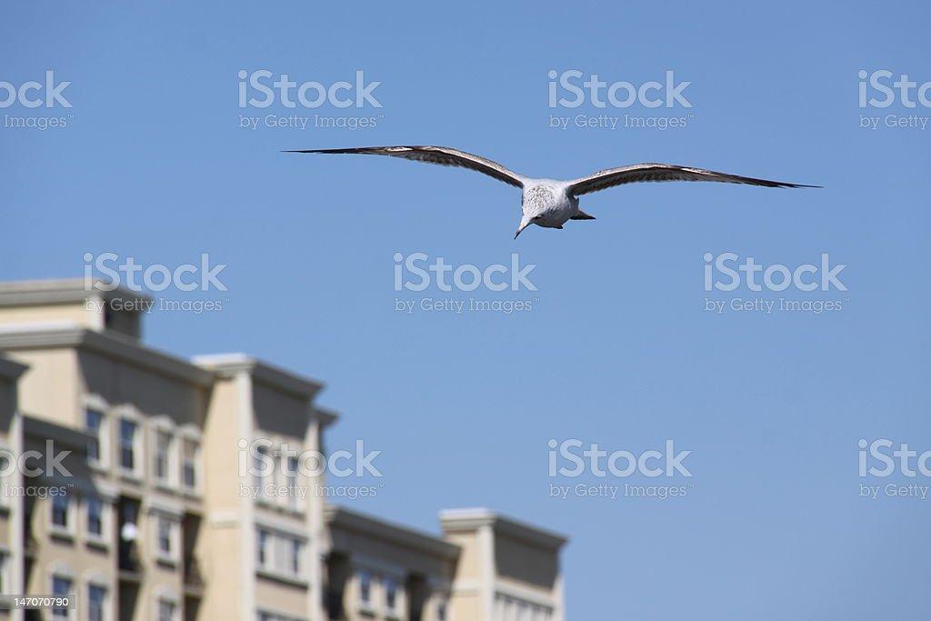 Seagull in Daytona Beach stock photo