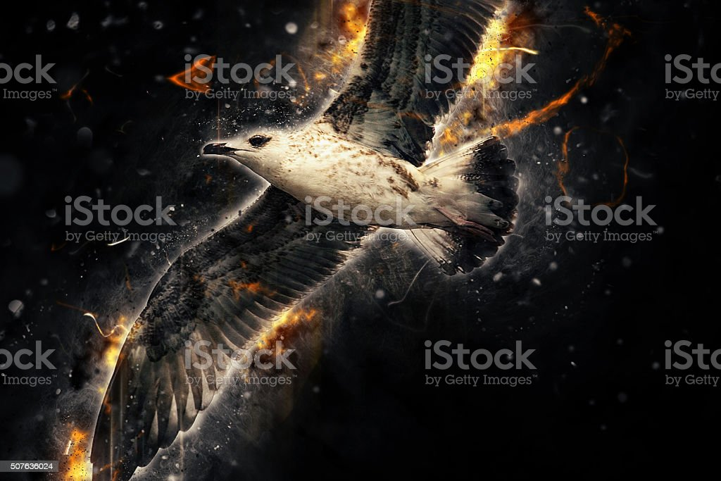 Seagull in flight. Artistic grunge fury effect stock photo