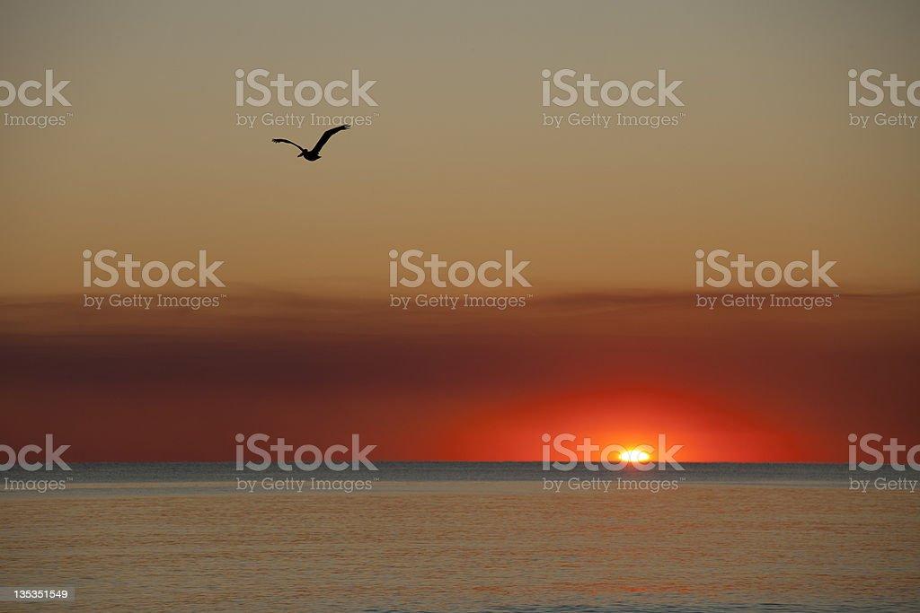 Seagull in flight at sunset near Destin, Florida stock photo