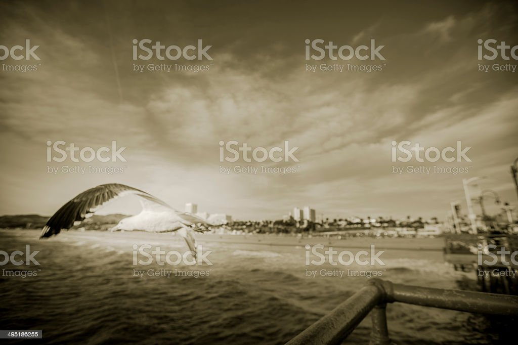Seagull in Flight at the Santa Monica Pier royalty-free stock photo