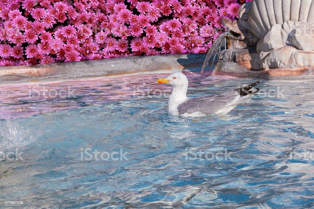 seagull in fountain stock photo