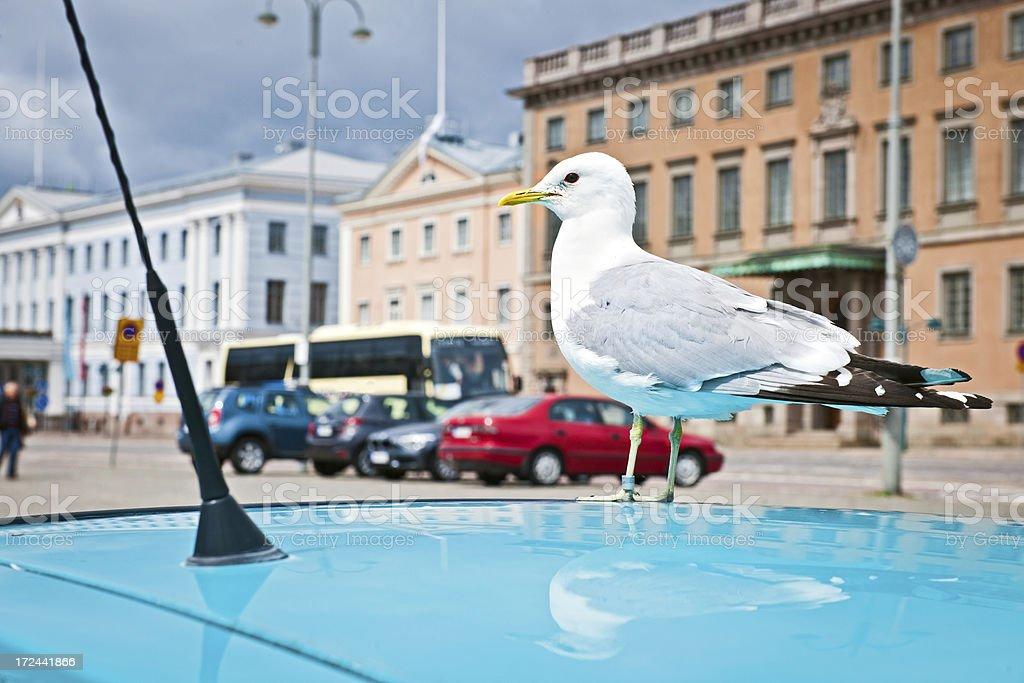 Seagull in Helsinki Finland Europe royalty-free stock photo