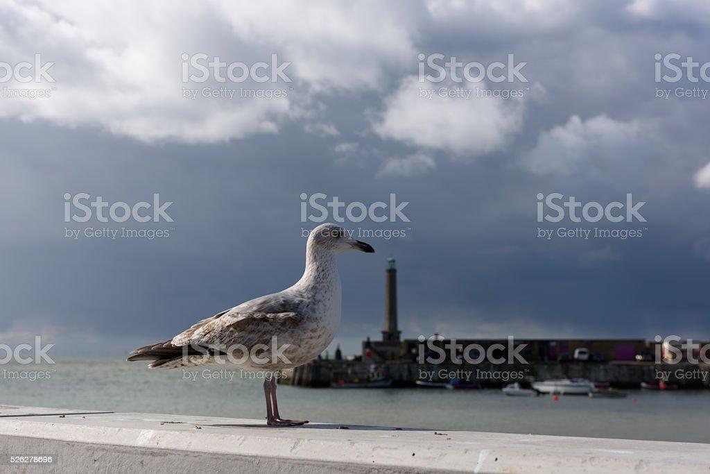 Seagull in Margate, Kent, UK stock photo
