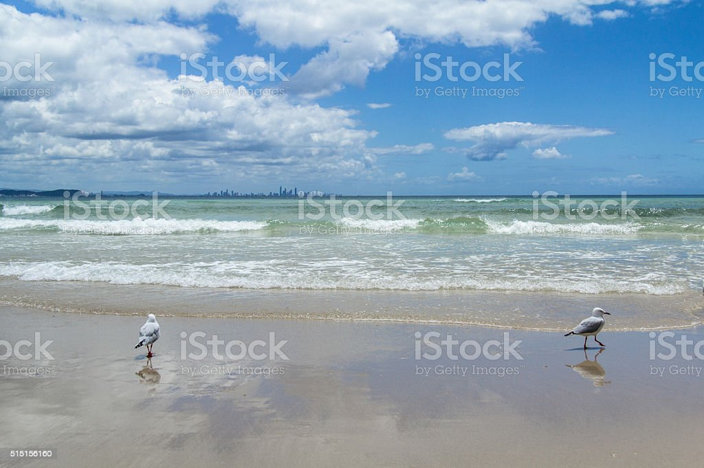 Seagull in the ocean stock photo