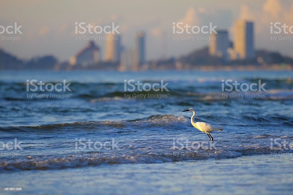Seagull in the sea and sunlight stock photo