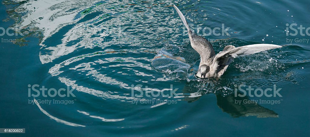 Seagull landing in a harbour stock photo