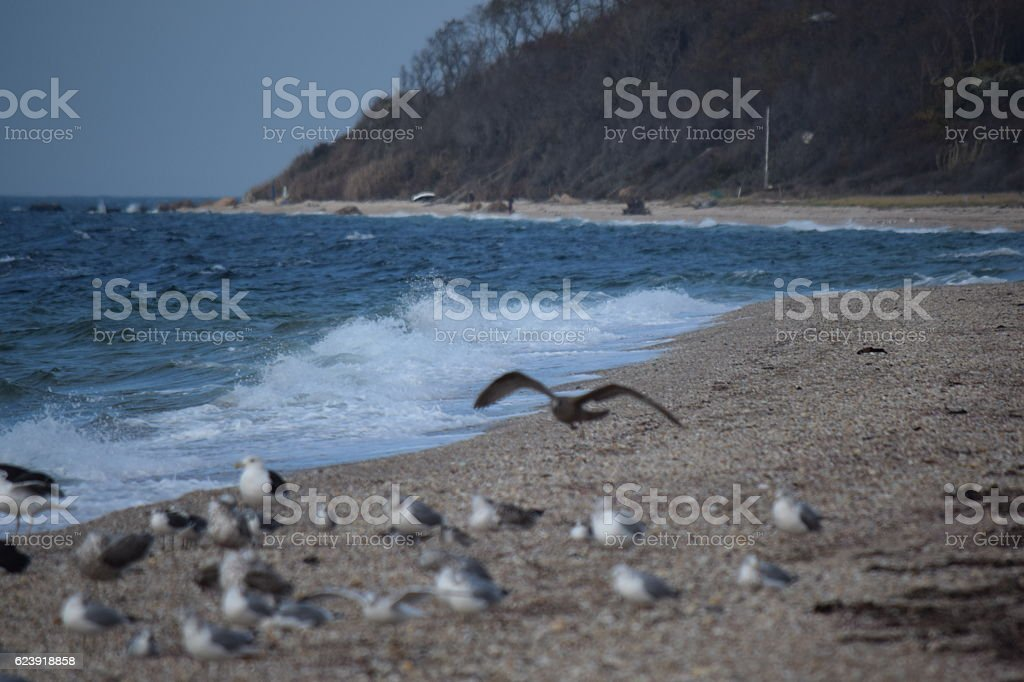seagull landing stock photo
