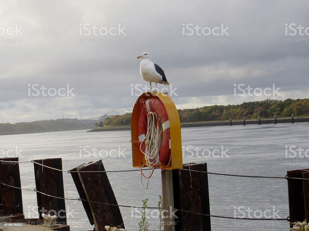 Seagull & life ring ( buoy ) stock photo