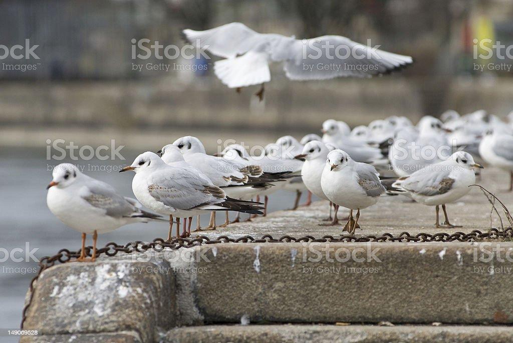 seagull meeting stock photo
