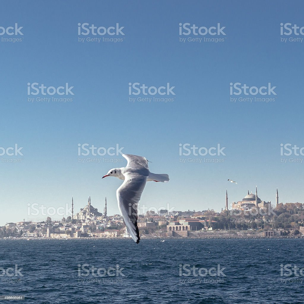 Seagull ,n Istanbul stock photo