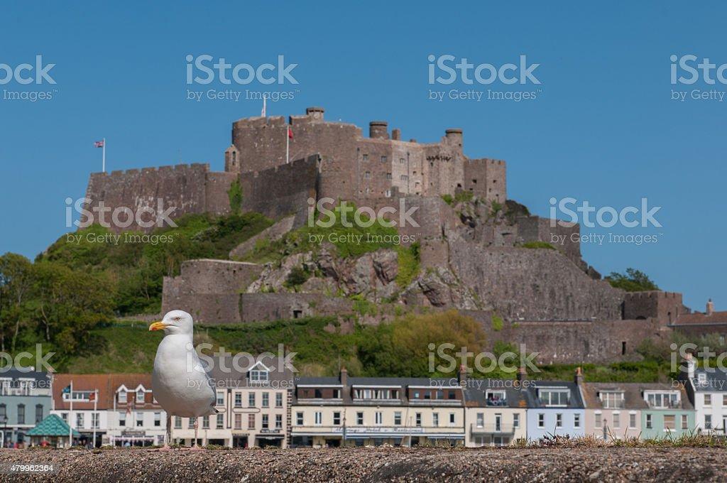 Seagull near Mont Orgueil castle stock photo