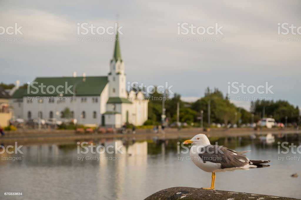 Seagull on a blurry background stock photo