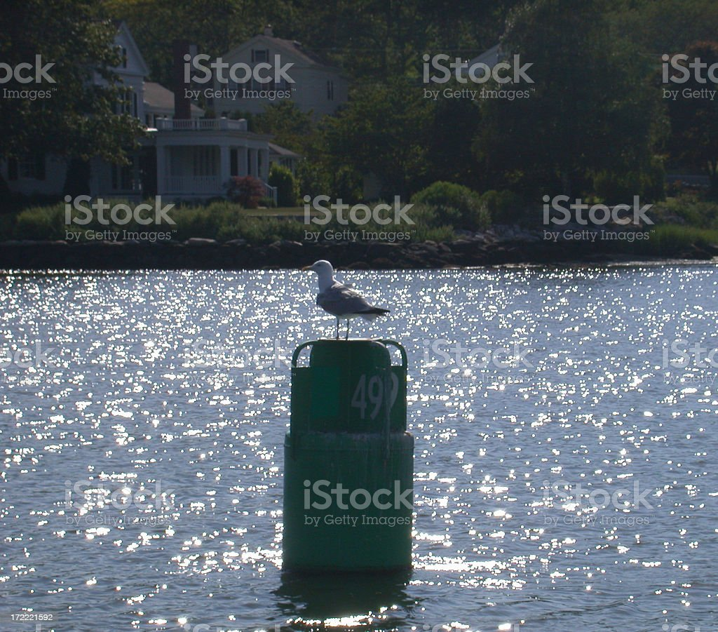 Seagull on a Buoy royalty-free stock photo