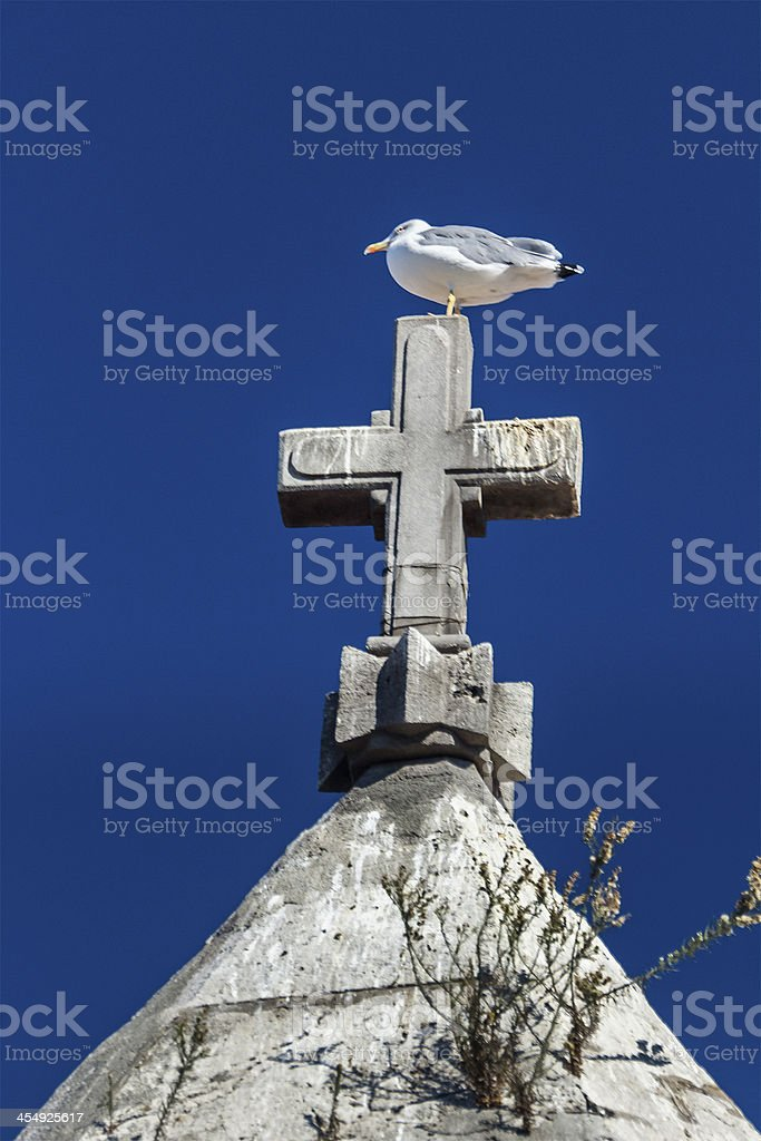 Seagull on a cross royalty-free stock photo