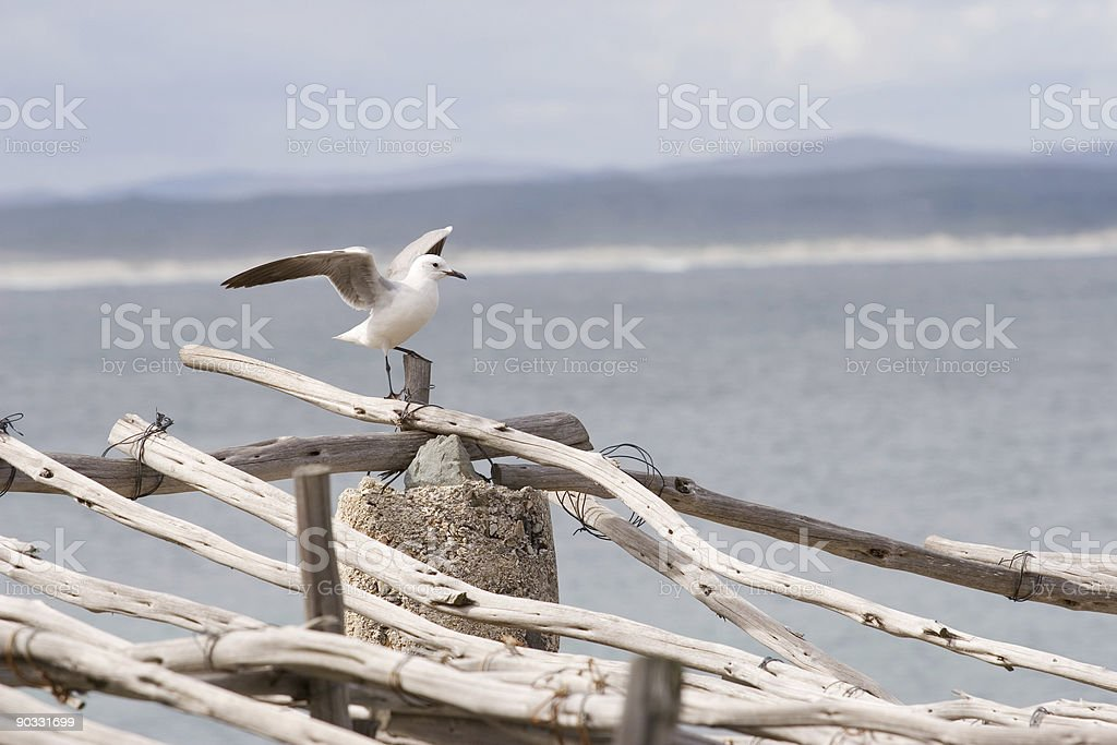 seagull on a post stock photo