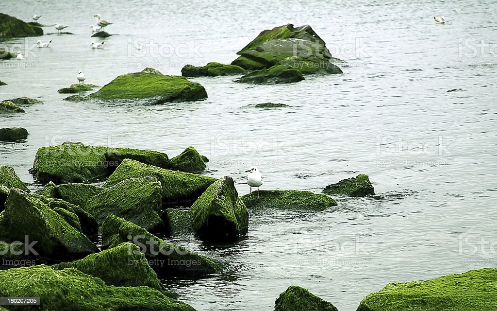 Seagull on a rock stock photo