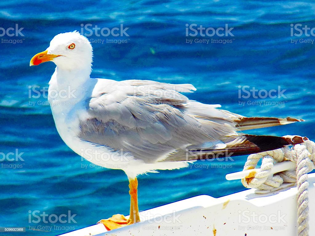 Seagull on boat stock photo
