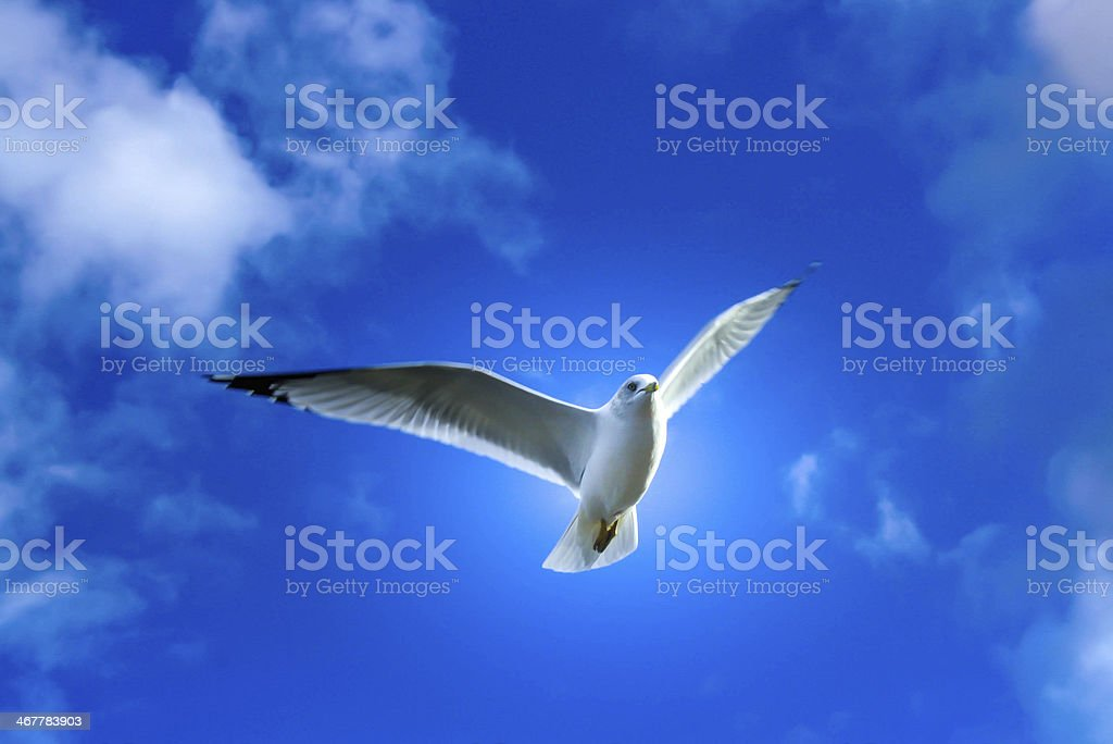 Seagull on Bright blue sky royalty-free stock photo