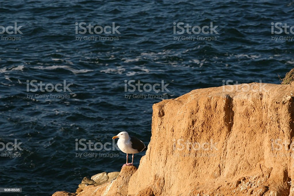 Seagull on Cliff royalty-free stock photo
