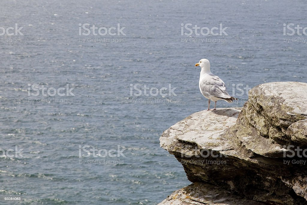 Seagull on edge of cliff stock photo