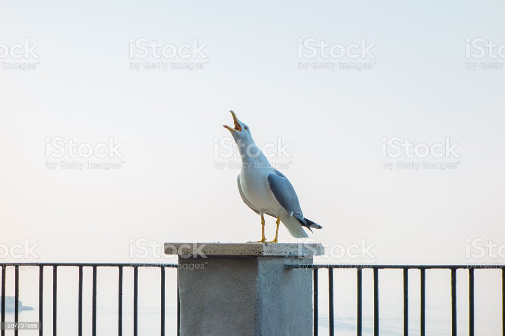 Seagull on Fence stock photo