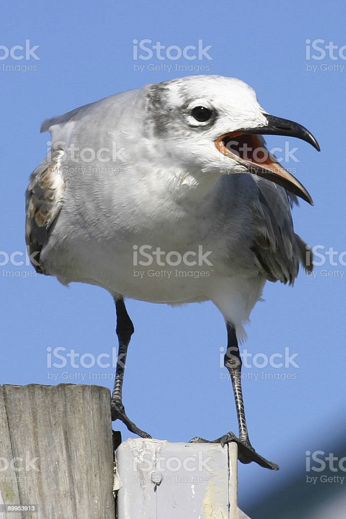Seagull on Fishing Pier royalty-free stock photo