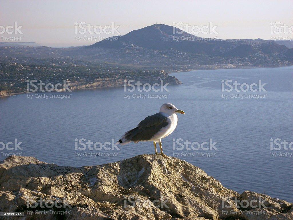 Gaivota na pedra elevada durante o nascer do sol sobre o mar Mediterrâneo foto de stock royalty-free
